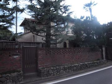160206murasakinoyanagi18