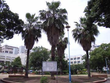 060618mikuraatopark1