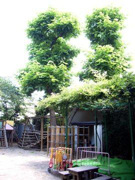060624kitanopark