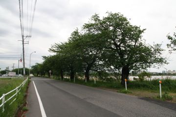 080505cycle11
