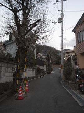 090103nukatasansou4