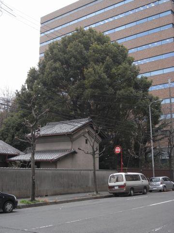 090121higashiyodogawa8