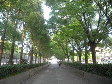 090509miyakojima7