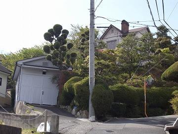 130421hibarigaoka6