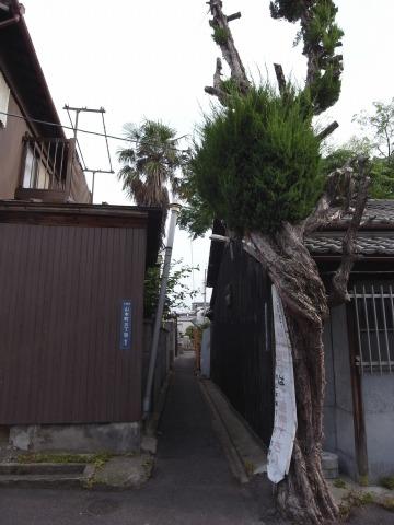 140621yamamotohakken08