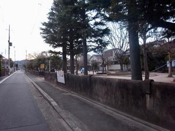 160206murasakinoyanagi0