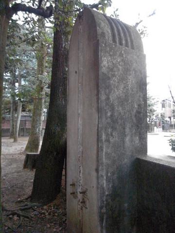 160206murasakinoyanagi6